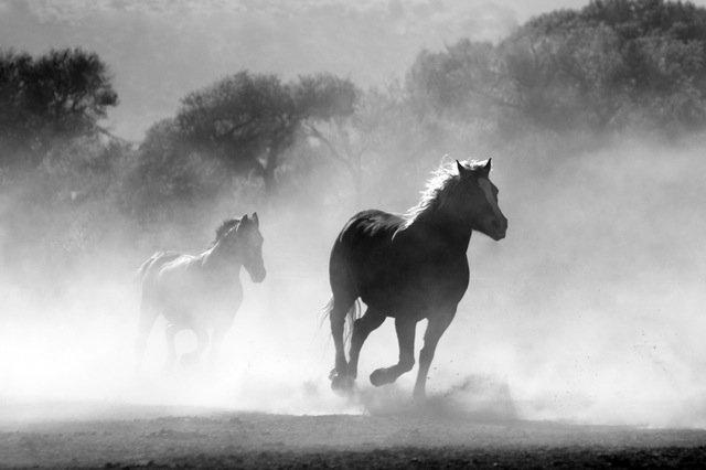 horse-herd-fog-nature-52500 (1)